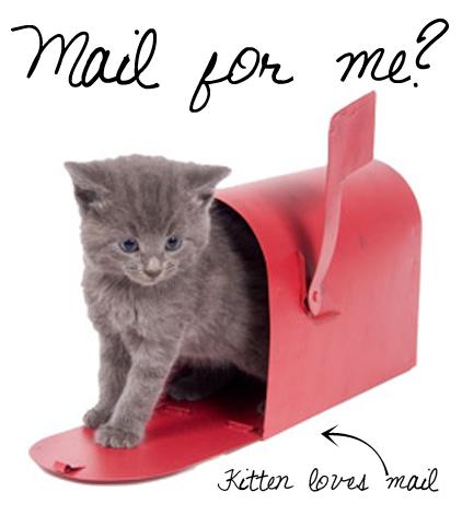 kitten and mailbox